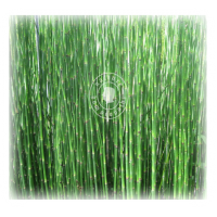 Equisetum Hyemale (MP, 6C, 30C)
